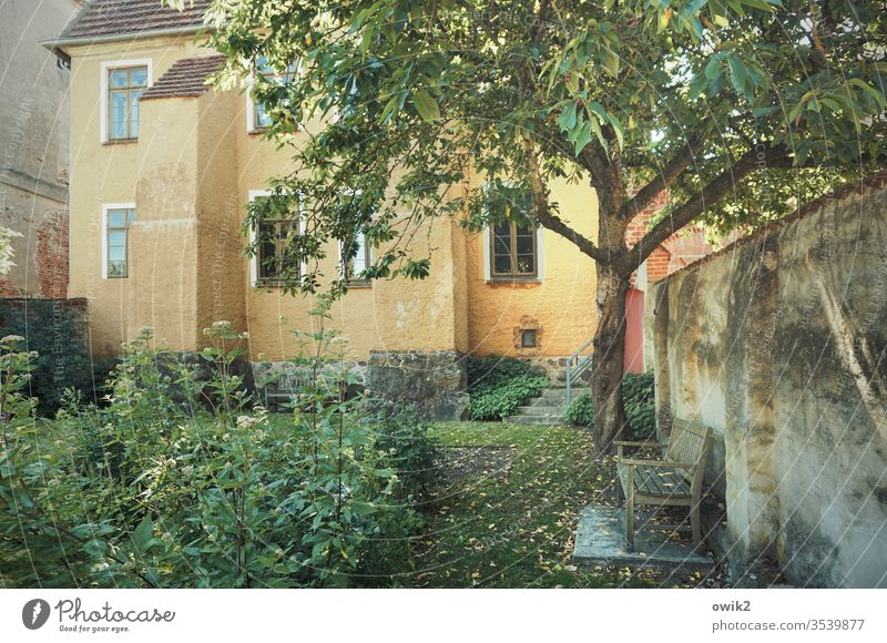 garden behind the house Garden House (Residential Structure) Wall (barrier) Bench tree plants bushes Window Idyll tranquillity Peaceful Autumn Sunlight