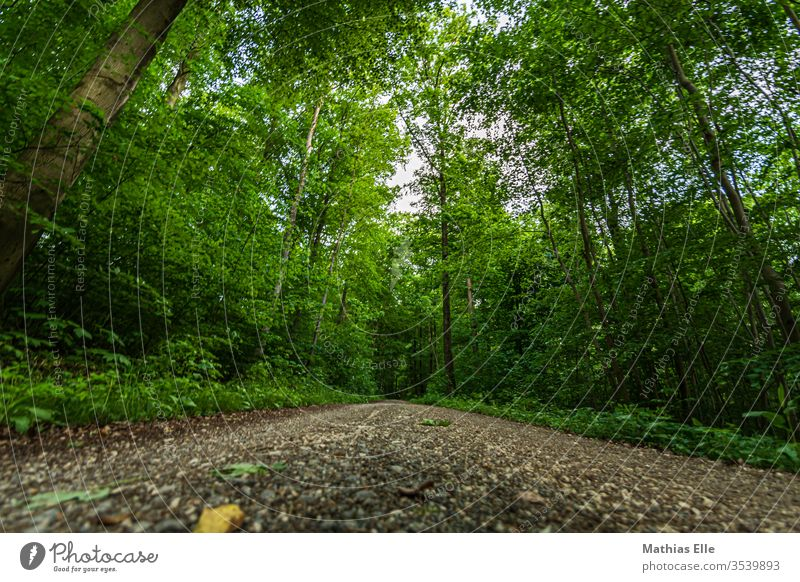 Forest path in dense green off pebble huts foliage stones Street Hiking Walking Jogging Forest walk economy walk take a walk Exterior shot Nature Colour photo