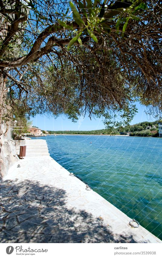 more seas for all Ocean Mediterranean sea Bay Balearic Islands Majorca quay wall tree Aleppo pine turquoise Blue Vacation & Travel Coast Water Deserted Stairs
