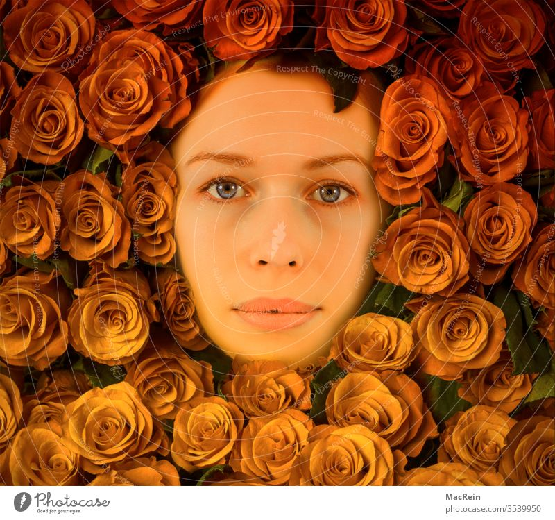 Bedded in roses portrait portrait photo Face Woman pink bouquet of roses Rose leaves Rose blossom Rose plants flowers Adults Copy Space