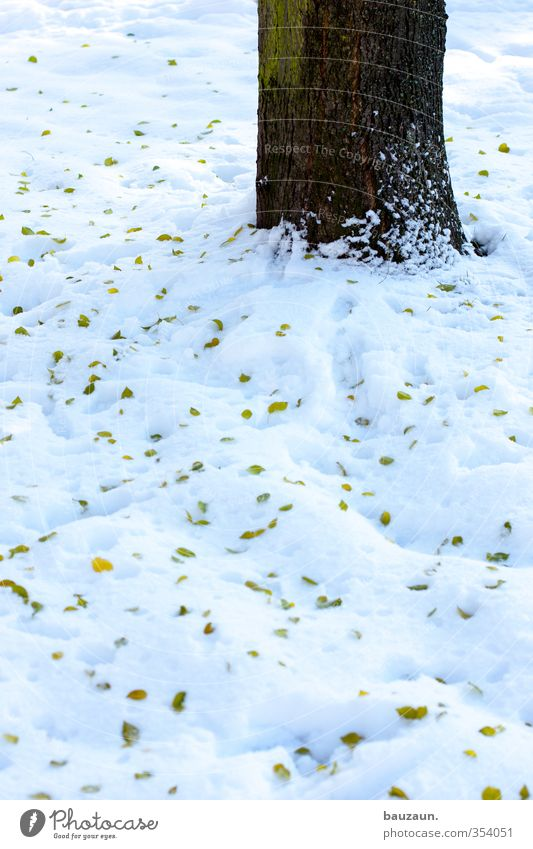 Nature Green White Tree Landscape Leaf Winter Cold Meadow Snow Life Lanes & trails Wood Garden Brown Park