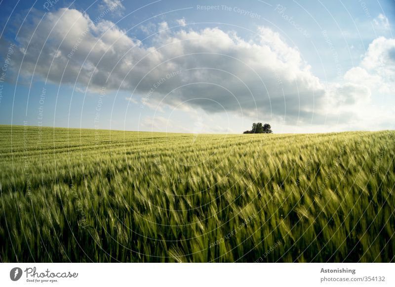 Field I Environment Nature Landscape Plant Sky Clouds Horizon Spring Weather Beautiful weather Warmth Tree Leaf Agricultural crop Hill Blue Yellow Green White