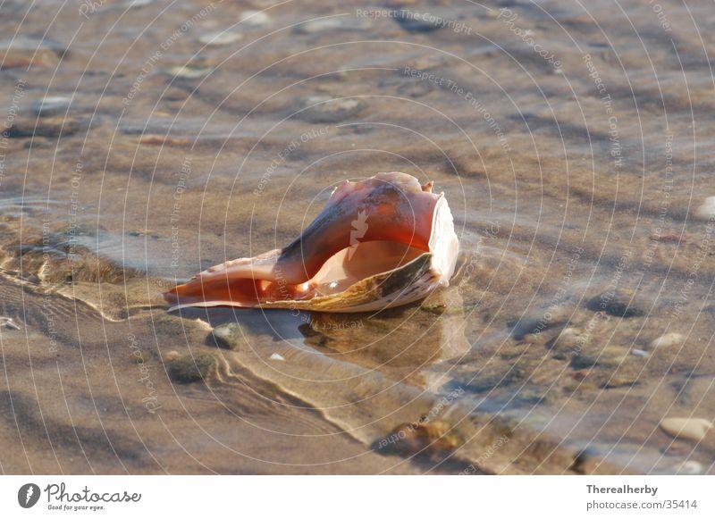 Mussel on the beach Beach Ocean