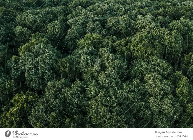 Aerial view of lush green forest in the mountains above abstract aerial area background beautiful beech branches country countryside eco ecology ecosystem