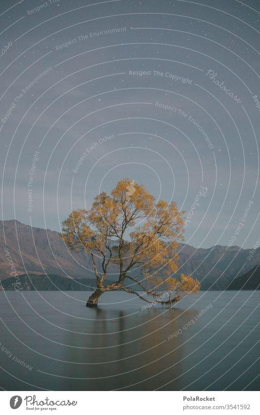 #As# Wanaka Stars New Zealand New Zealand Landscape Nature Colour photo Exterior shot Mountain Vacation & Travel Coast Water Deserted Lake Lakeside Environment