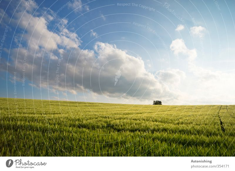 Field II Environment Nature Landscape Plant Air Sky Clouds Horizon Spring Weather Beautiful weather Tree Grass Leaf Agricultural crop Bright Blue Yellow Green