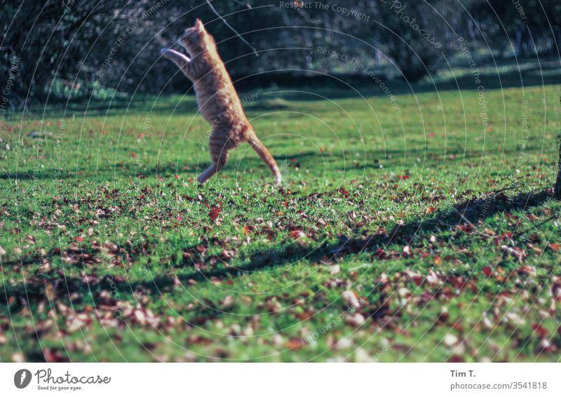 Cat jumping hangover Pet Animal Colour photo Cute Domestic cat Animal portrait Exterior shot Pelt Deserted Cuddly Curiosity