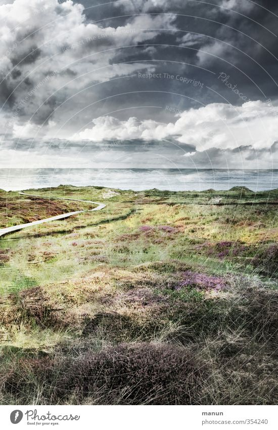 North Sea coast Nature Landscape Elements Earth Sand Air Water Sky Clouds Storm clouds Weather Wind Thunder and lightning Plant Bushes Moss Wild plant Heathland