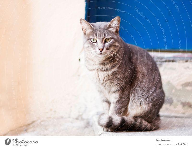 Cat Beautiful Animal Pelt Animal face Istanbul Street cat