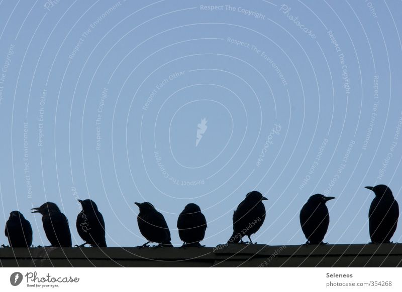 On the wall, on the lurk Environment Nature Sky Cloudless sky Roof Animal Wild animal Bird Beak Group of animals To talk Communicate Small Attachment