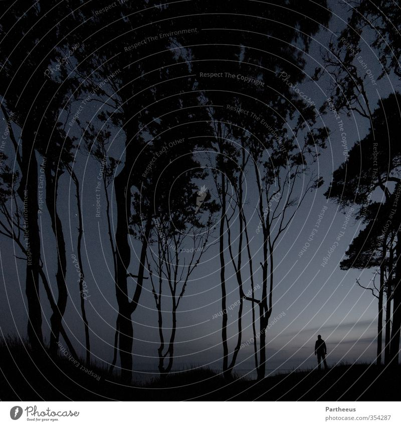 alone in the dark Human being Masculine Young man Youth (Young adults) Man Adults 1 18 - 30 years 30 - 45 years Nature Landscape Sky Night sky Stars Forest