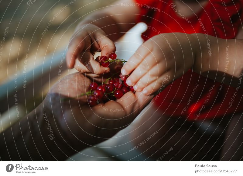 Close up child hand picking currants Ribe red currant Berries Berry Fruit Redcurrant Ribes rubrum Berry bushes Nutrition Food Colour photo Exterior shot