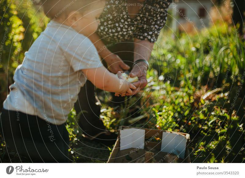Child and grandmother gardening Generation Grandmother Family & Relations family Together togetherness Grandchildren Happy Lifestyle Authentic Caucasian senior