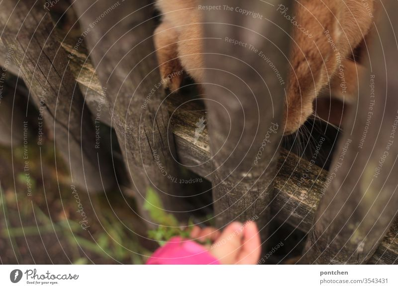 Love of animals. Toddler feeds rabbits through a garden fence with dandelions. Animal husbandry, pet. Giant rabbit. Feeding Children`s hand lowen tooth Pet
