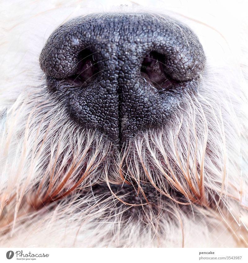 guter riecher | wörtlich genommen Nase Hund Hundenase Hundeschnauze Fell schwarz weiss Nahaufnahme riechen