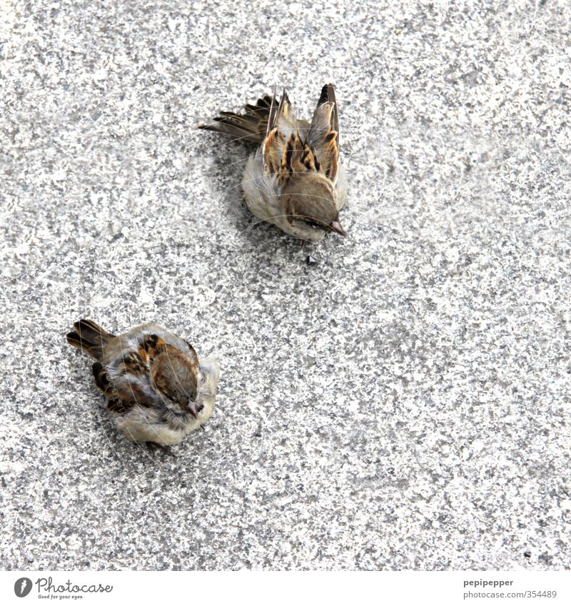 BirdPerspective Street Lanes & trails Animal Wild animal Animal face Wing Claw Paw 2 Pair of animals Stone Eating To feed Feeding Wait Sparrow Exterior shot