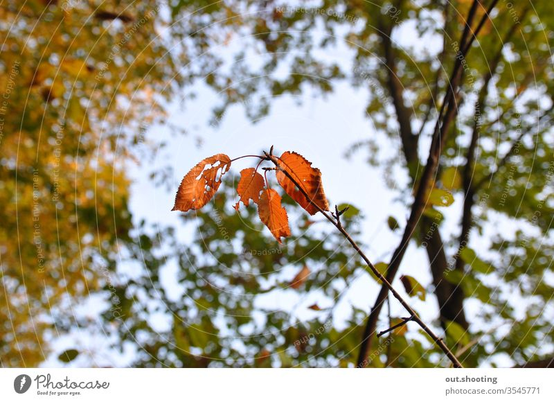 Amazing shot of some autumn leaves. Autumn Autumnal Autumn leaves Autumnal colours Leaf Orange Sky Sky blue Yellow outdoor