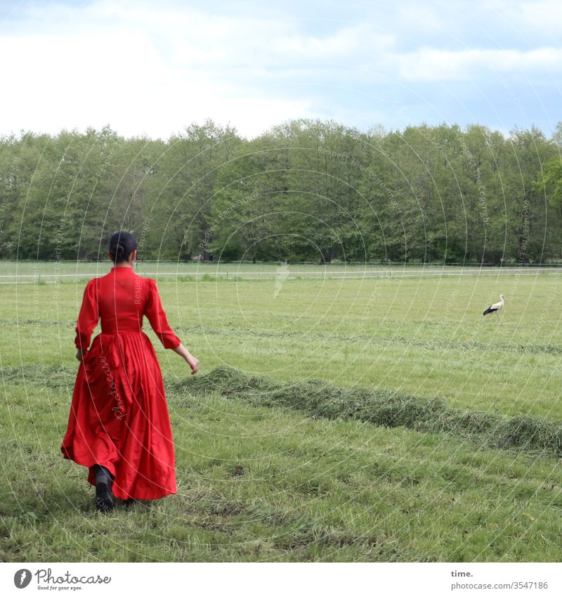 Estila and the stork Edge of the forest Meadow Dark-haired braid Long-haired Dress green Observe look Feminine Woman Stork Sky Going Walking green waste Hay