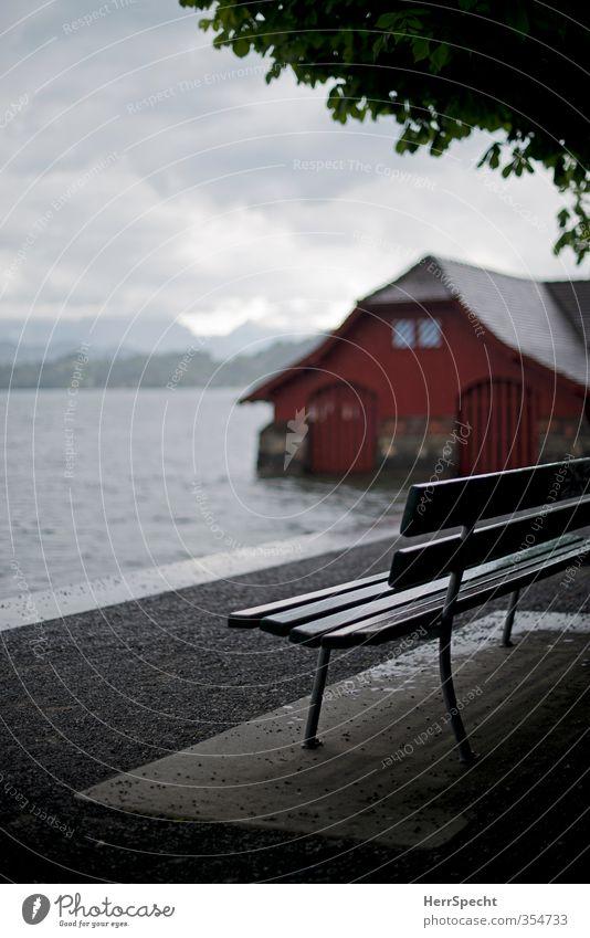 Vierwaldstätter rain soup Environment Nature Landscape Sky Clouds Climate Bad weather Storm Wind Rain Tree Leaf Chestnut tree Lakeside Lake Lucerne Switzerland