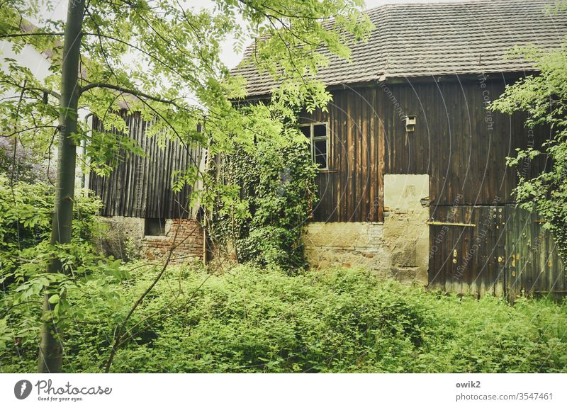 Leave it to itself Barn Building tree Bushes thickets Ivy Goal Window Wood Stone Old Roof untreated Wall (barrier) Former Transience Deserted Wall (building)