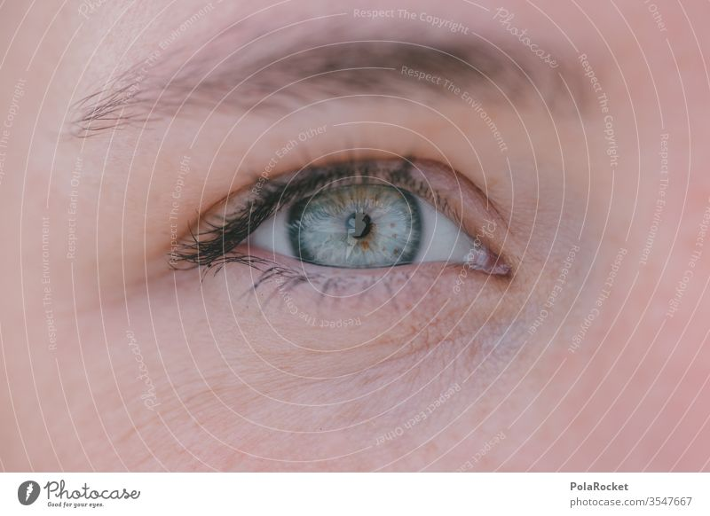 #As# In view Colour photo Skin iris Vision Woman Detail Macro (Extreme close-up) Pupil Close-up Face Eyelash ocular Looking Human being Opthalmology Eye colour