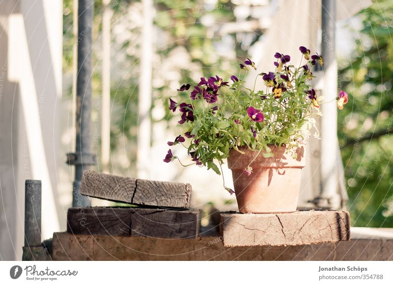 Green Plant Summer Flower Leaf Yellow Blossom Happiness Construction site Violet Wooden board Build Converse Flowerpot Foliage plant Embellish