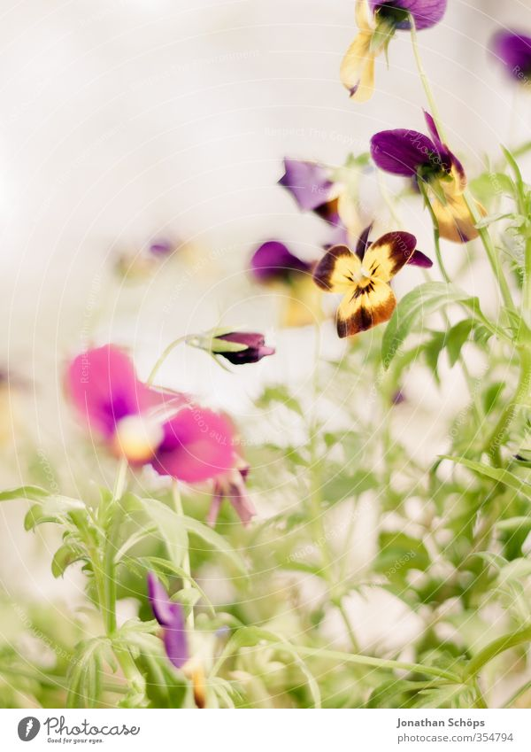 Plant Green Flower Leaf Yellow Blossom Happy Contentment Happiness Joie de vivre (Vitality) Violet Kitsch Bouquet Flower meadow Foliage plant Spring fever