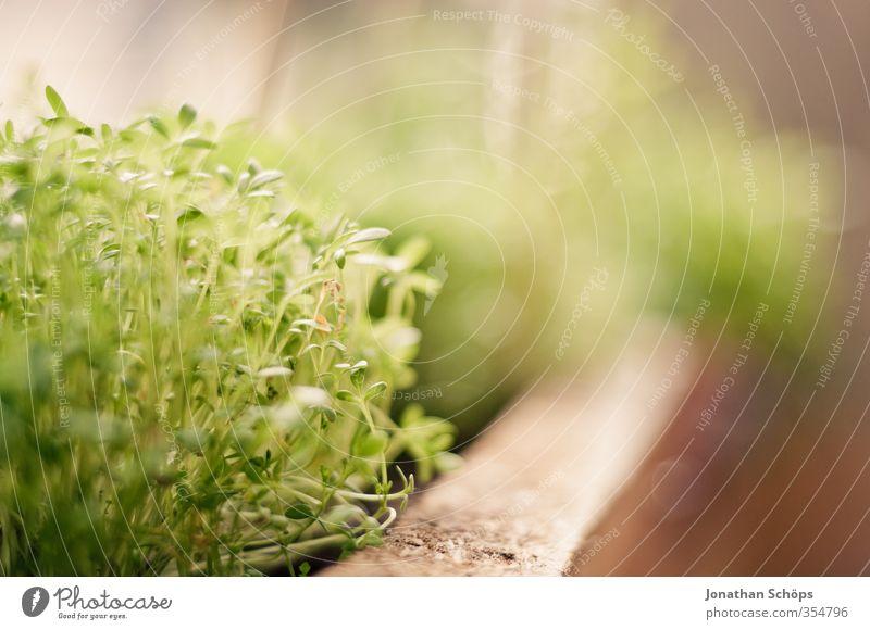 Green Plant Esthetic Organic produce Foliage plant Window board Window box