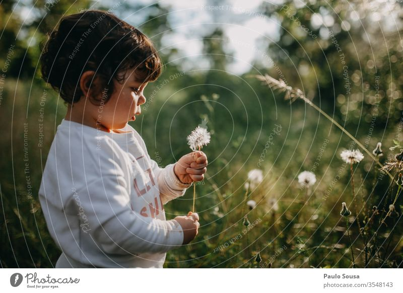 Child holding dandelion childhood Dandelion Spring Spring fever Spring flower Flower Blossoming Beautiful Beautiful weather Day Sunlight Spring day 1 - 3 years