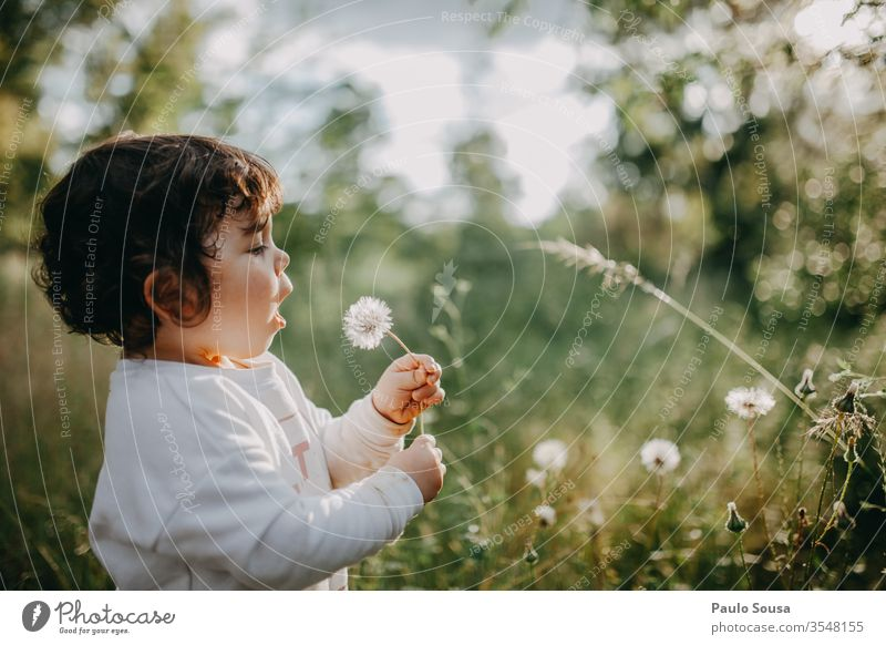 Child blowing dandelion childhood Nature Caucasian people 1 - 3 years Colour photo Infancy Human being Toddler 3 - 8 years Girl Portrait photograph Happiness