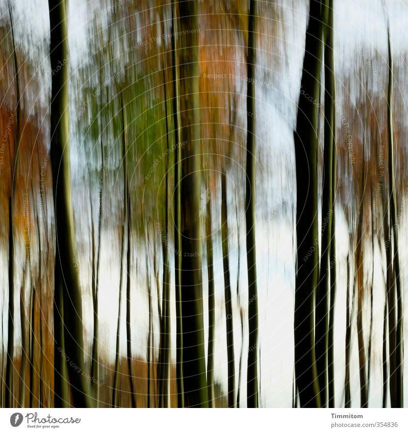 Hääbschdwald . Environment Nature Tree Forest Looking Esthetic Simple Natural Green Black Emotions Autumn Autumnal Automn wood Colour photo Exterior shot