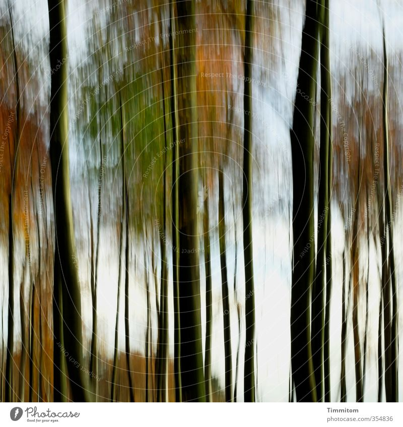 Nature Green Tree Black Forest Environment Emotions Autumn Natural Esthetic Simple Autumnal Automn wood