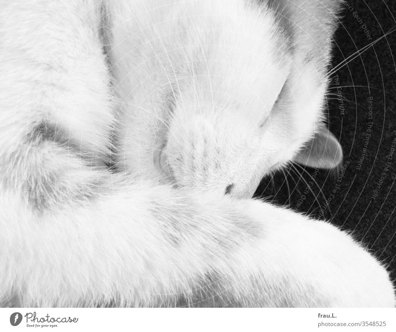 The young cat slept softly. Cat Pet 1 Animal portrait Day Interior shot Black & white photo relaxed Lie Pelt Contentment