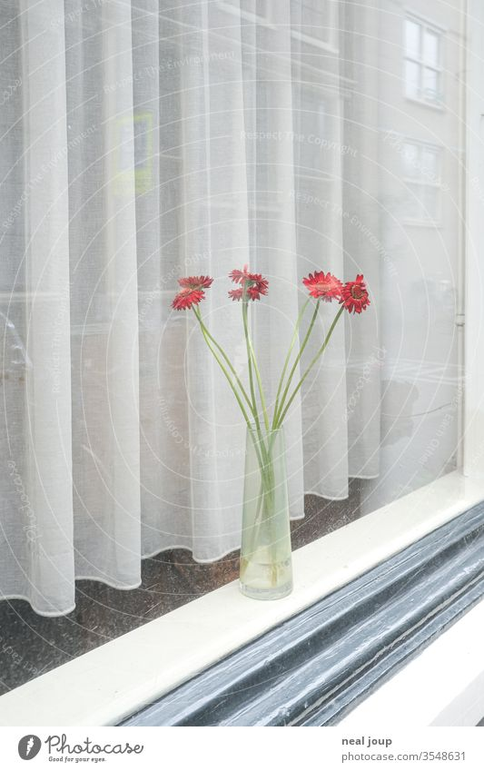 Window sill with flower vase flowers Flower vase Drape insulation Loneliness Bright White Red reflection melancholy tranquillity dwell at home Decoration