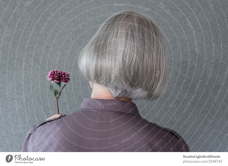 Elegant gray-haired woman holding red flower head purple grey silver short hair person female 50s 60s lady dahlia hairdo hairstyle styling stylish hairdresser