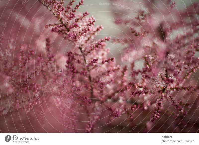 Nature Plant Environment Spring Blossom Natural Garden Pink Park Growth Fresh Blossoming Soft Multicoloured Light
