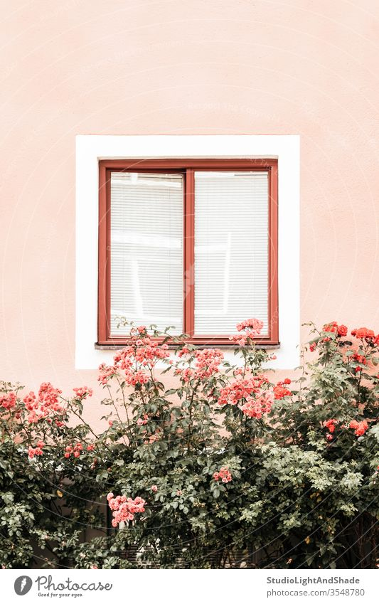 Flowers decorating window of a pink building flowers roses dusty pink orange green pastel house wall garden gardening cottage flora floral plant blooming