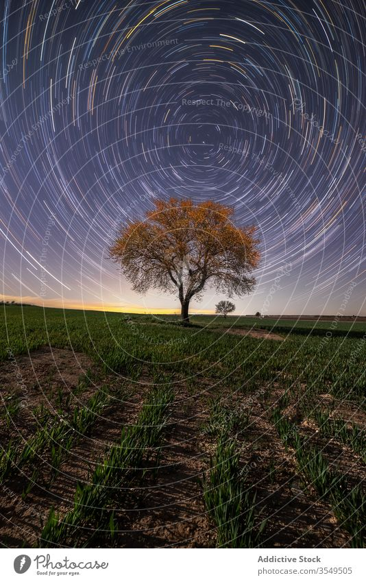 Starry sky over lonely tree on field starry trail picturesque scenery landscape long exposure majestic night magnificent spectacular breathtaking wonderland