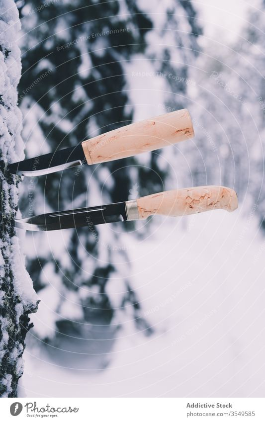 Knives in pine tree in winter forest knife stuck trunk snow lumber tool professional sharp nature frost white wood countryside equipment woods timber wooden