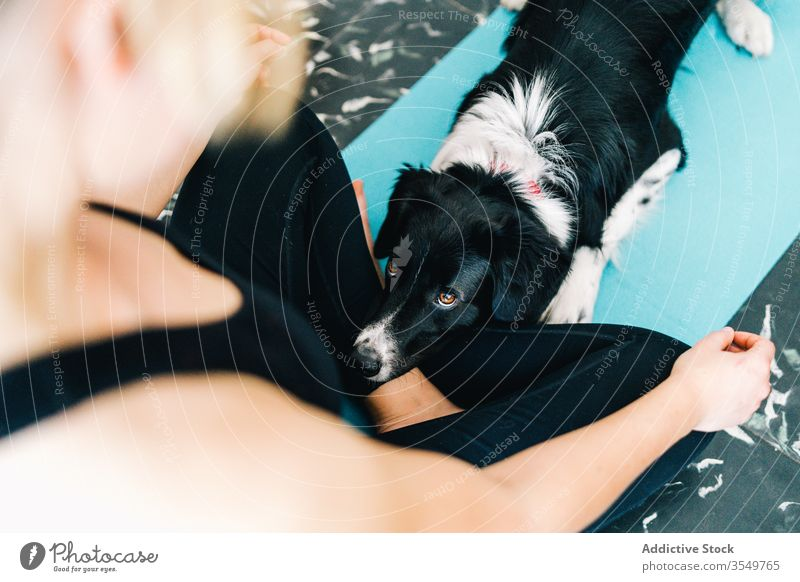 Dog lying near meditating woman yoga dog asana lotus pose meditate home pet together owner relax tranquil peaceful serene calm cute companion curious canine