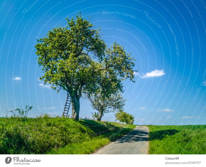Ladder with tree in spring ladder Wide idyllically German Agriculture Street Landscape cultivation area Agricultural crop Horizon Summer Meadow Nature Field