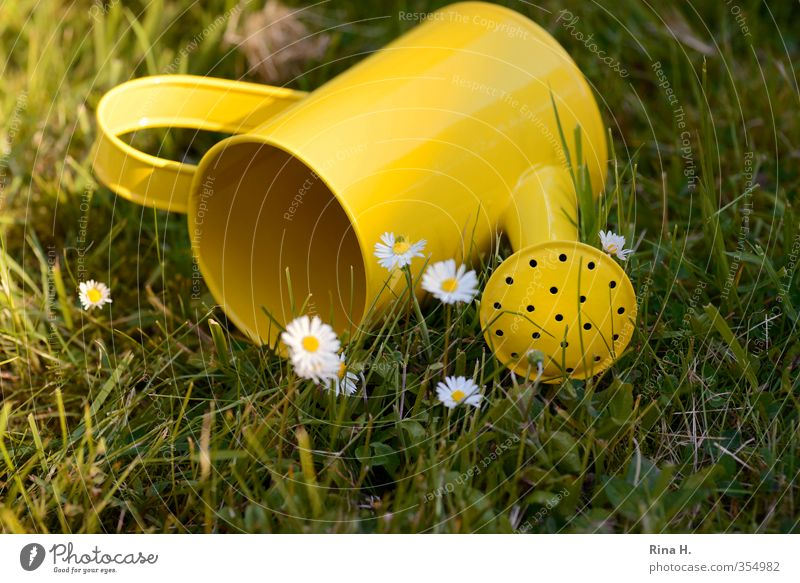 Finally summer ! Garden Spring Summer Beautiful weather Grass Lie Yellow Green Joie de vivre (Vitality) Watering can Daisy Tumble down Colour photo