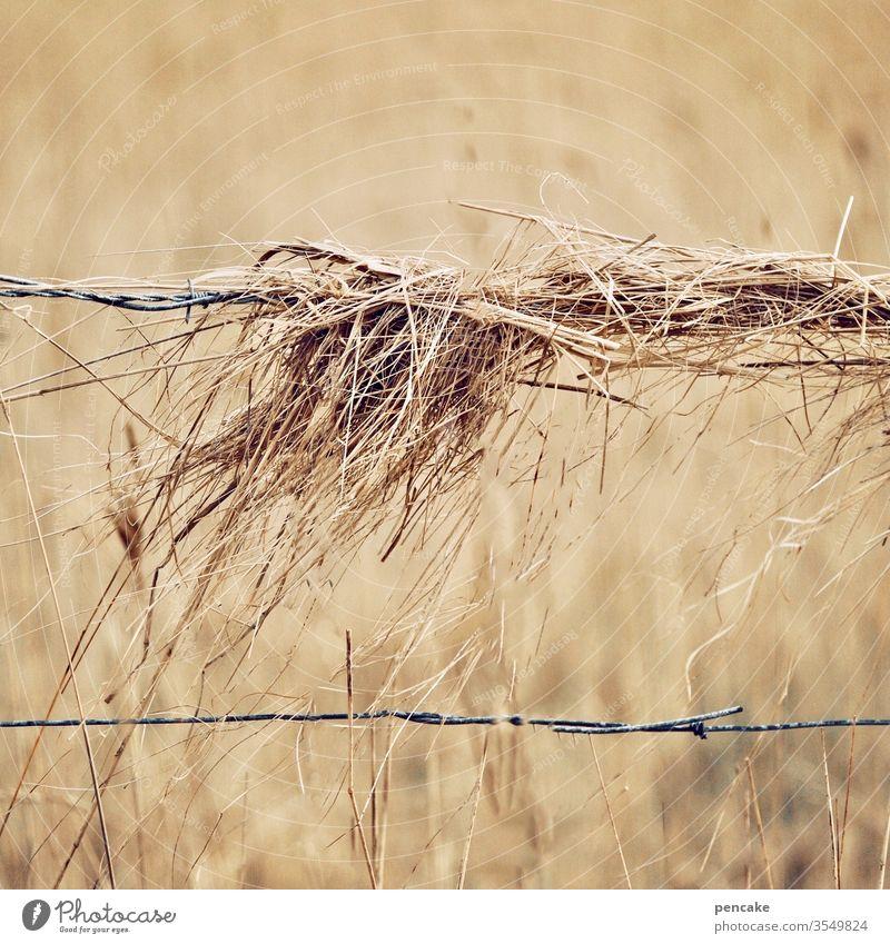 zaungast Heu Stroh Feld Getreide Zaun Weide Herbst reif trocken Wind