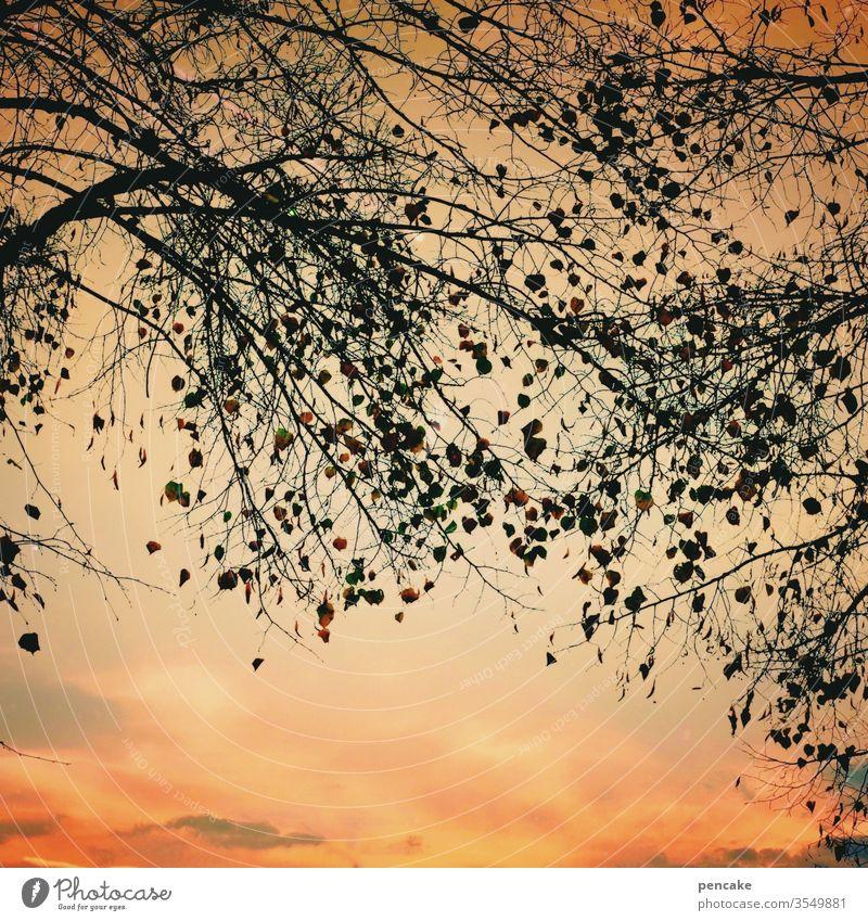 guten abend, gute nacht Himmel Abendrot Bäume Laub Äste Silhouette Baum