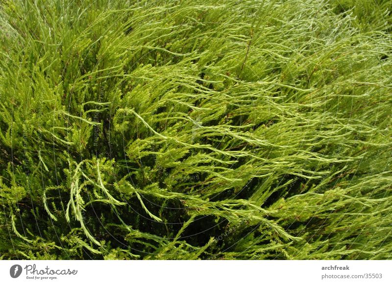 Green sea Plant Ocean Botany Barcelona Dive Jinxed Dream Soft Garden Wind Sun