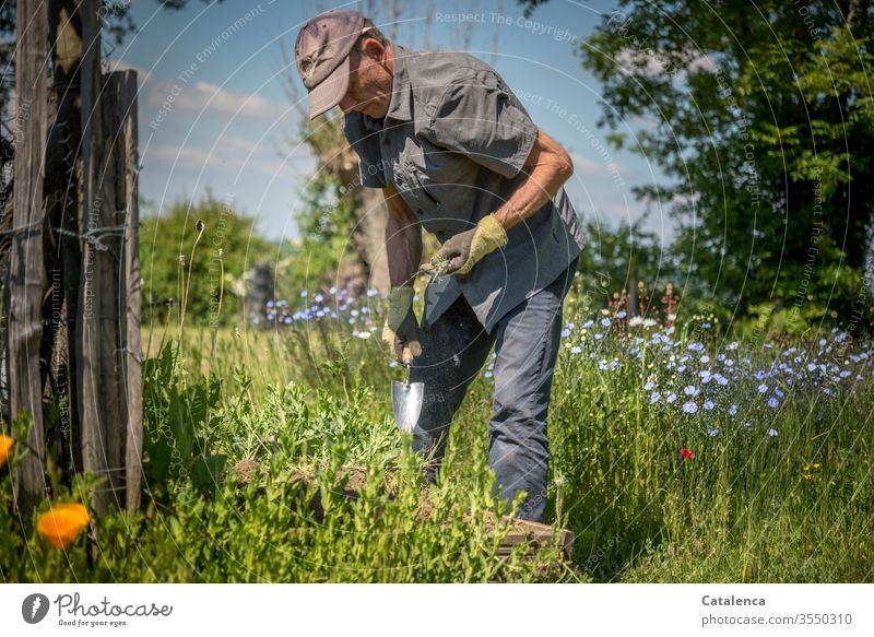 A man working in the garden Human being Man Adults Gardener Gardening by hand Plant flowers Linen Growth Earth Nature green Summer Weed weeding tree natural