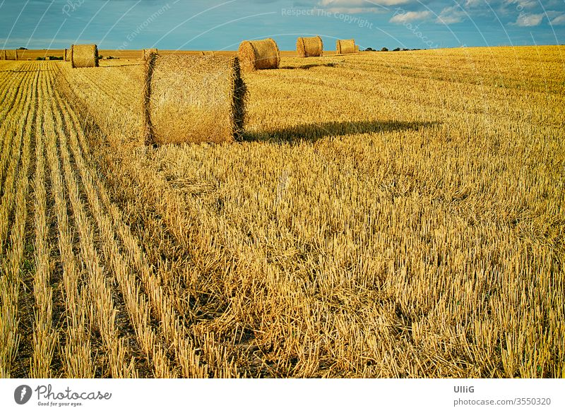 Bales of straw on a harvested grainfield at the end of summer. bale bale of straw grain field rural area land crop countryside agriculture landscape nature