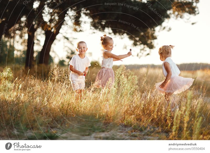 three children playing in the field in summer. young children playing outdoors smiling. happy family. carefree childhood happiness meadow park fun together