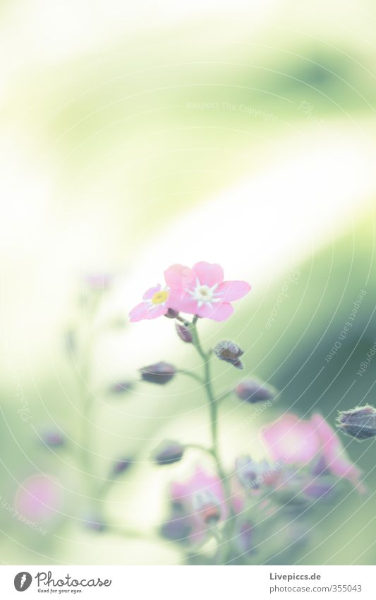 Nature Green Beautiful Plant Flower Leaf Environment Spring Small Blossom Garden Bright Natural Pink Park Illuminate