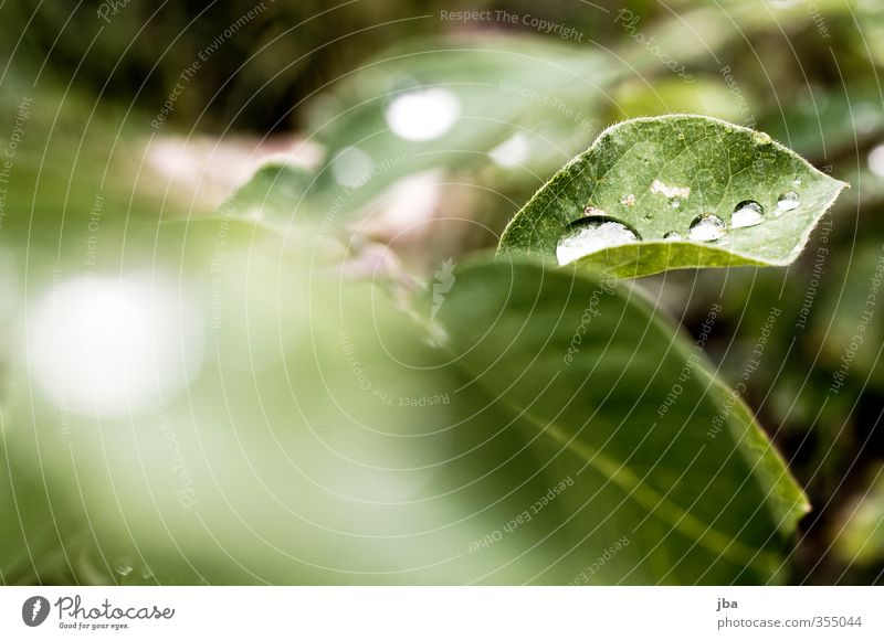 Dewdrop III Nature Plant Water Drops of water Summer Bushes Leaf Foliage plant Natural Green Concealed Dreary Fresh Multiple Colour photo Exterior shot Deserted